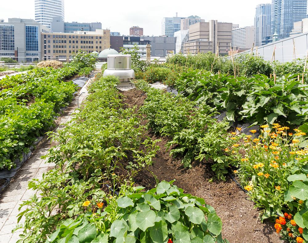 Cultiver sur le toit des immeubles