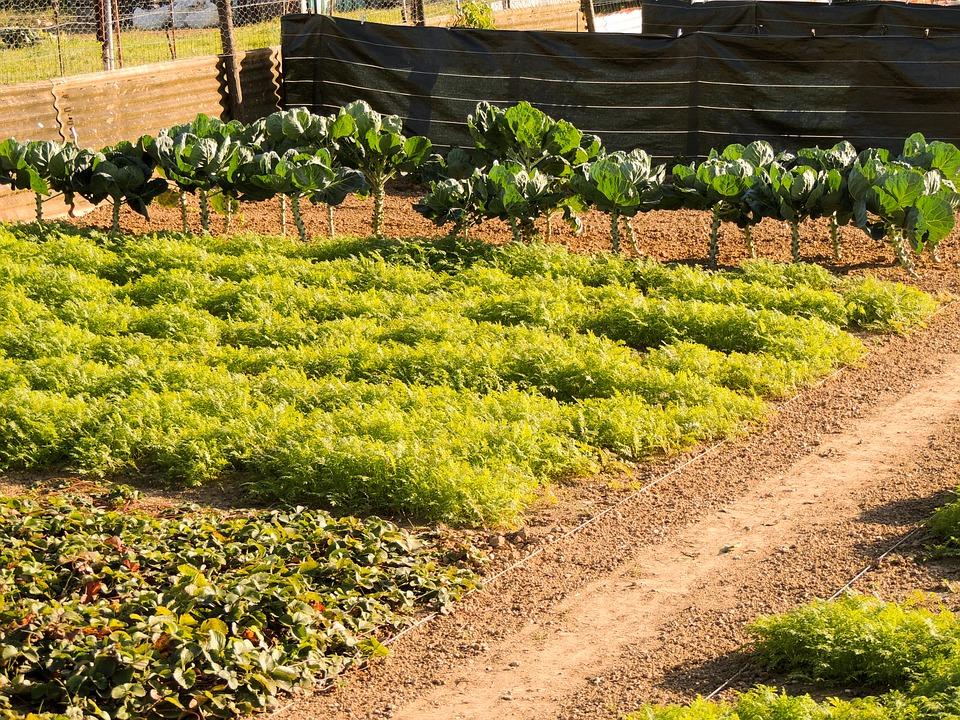 Prendre une parcelle pour faire un jardin potager