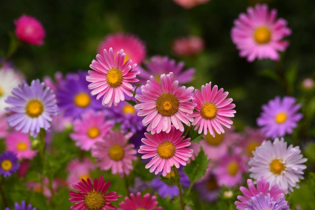 Les plantes faciles d'entretien
