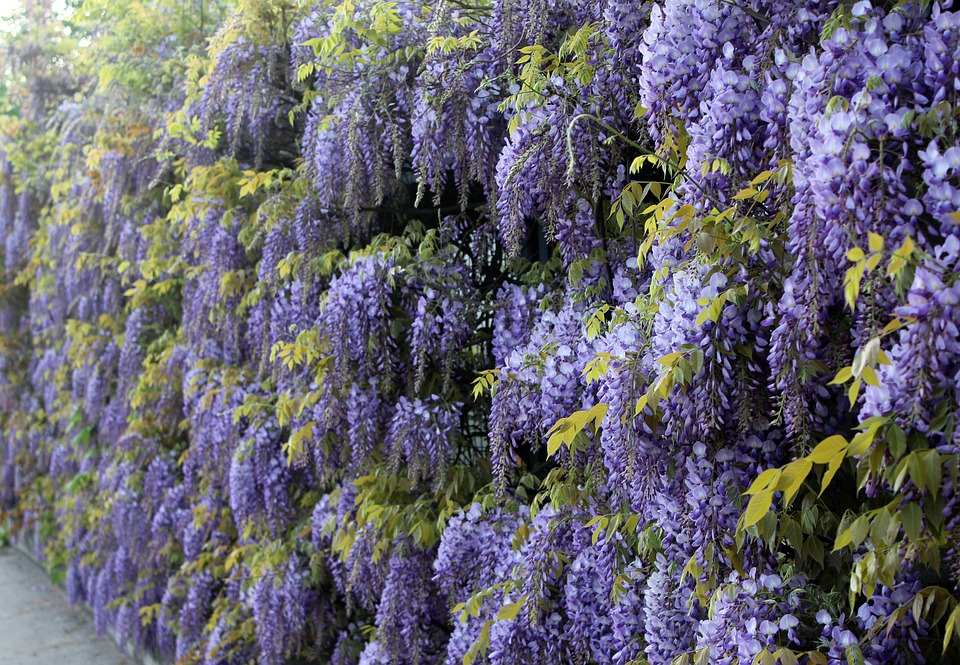 plantes verticales