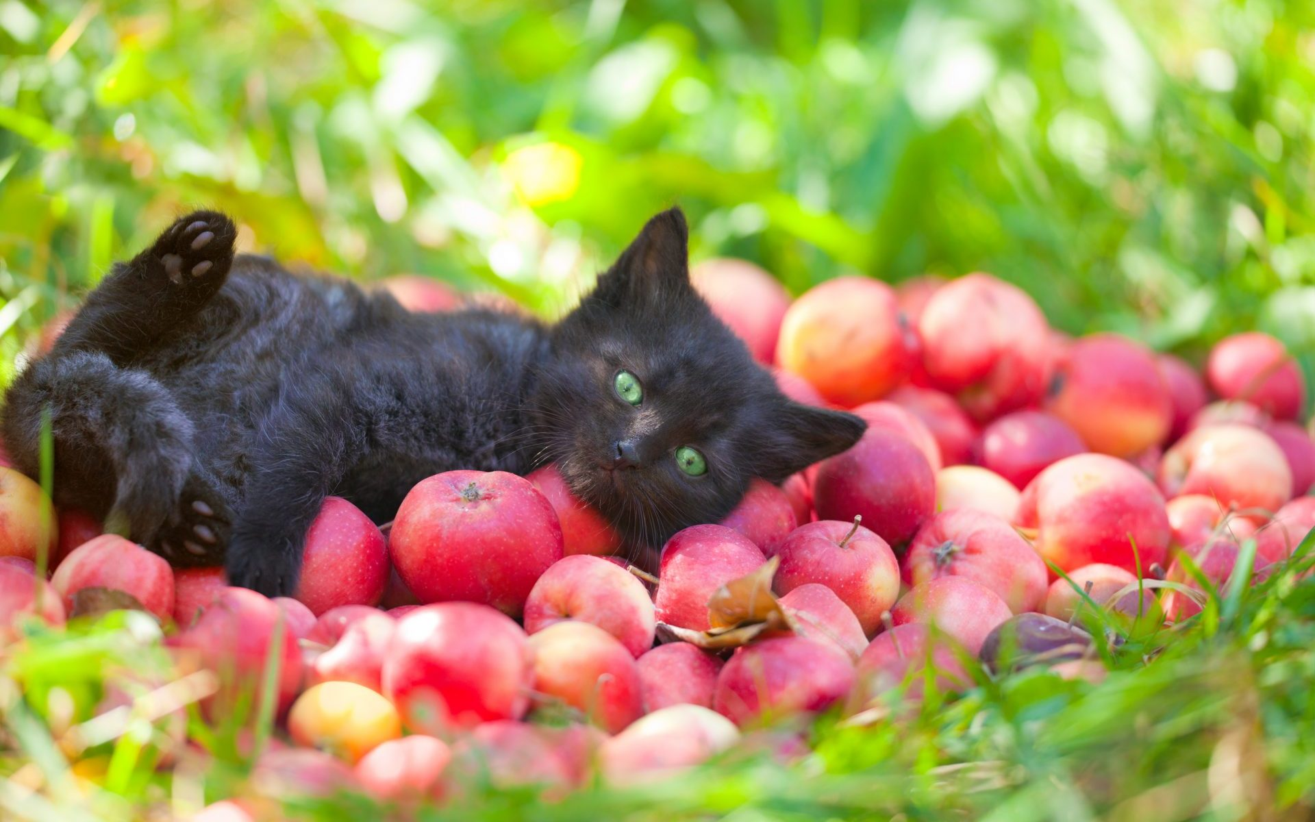 chat-potager