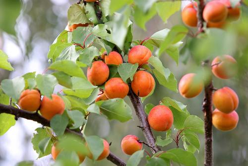 fruits-qualité