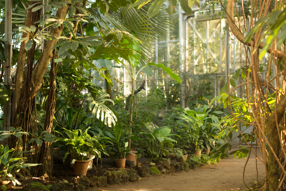Le jardin botanique de Tourcoing