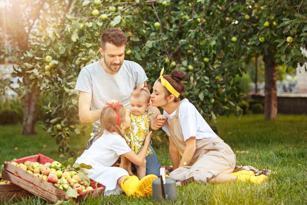Un jardin potager pour lutter contre le stress