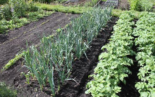 plantation-septembre