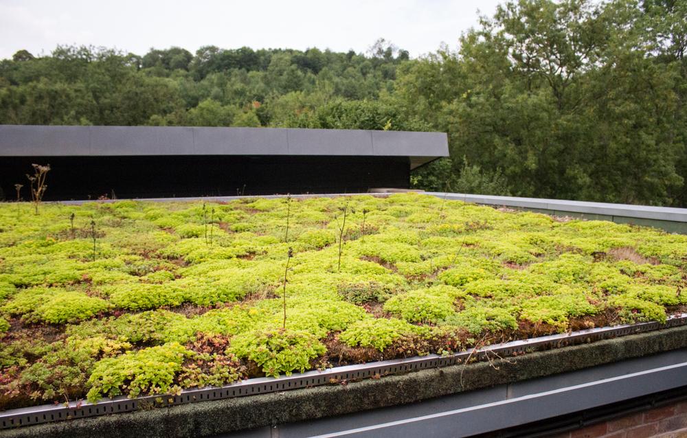 Prendre soin de son toit vert