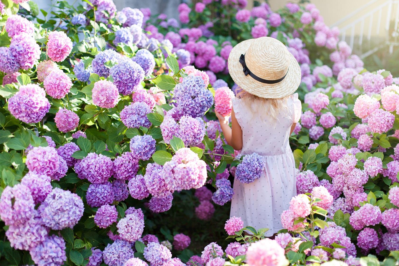association de couleurs florales