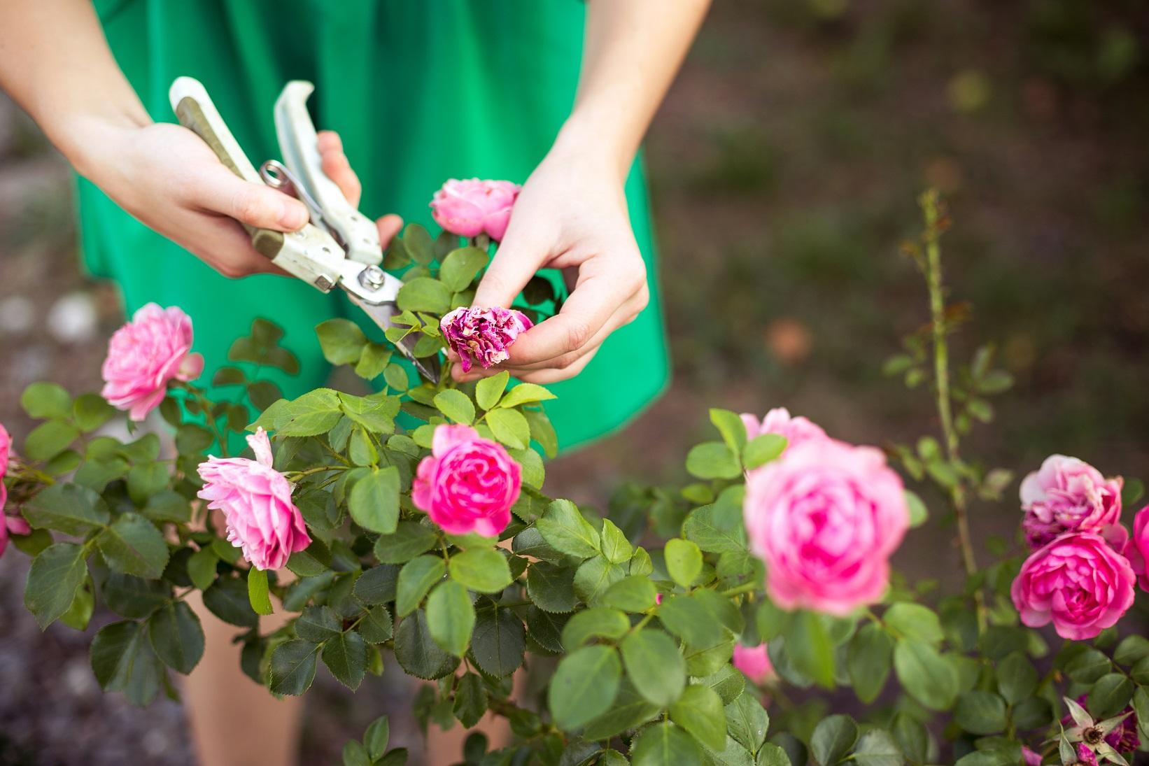 entretenir ses fleurs