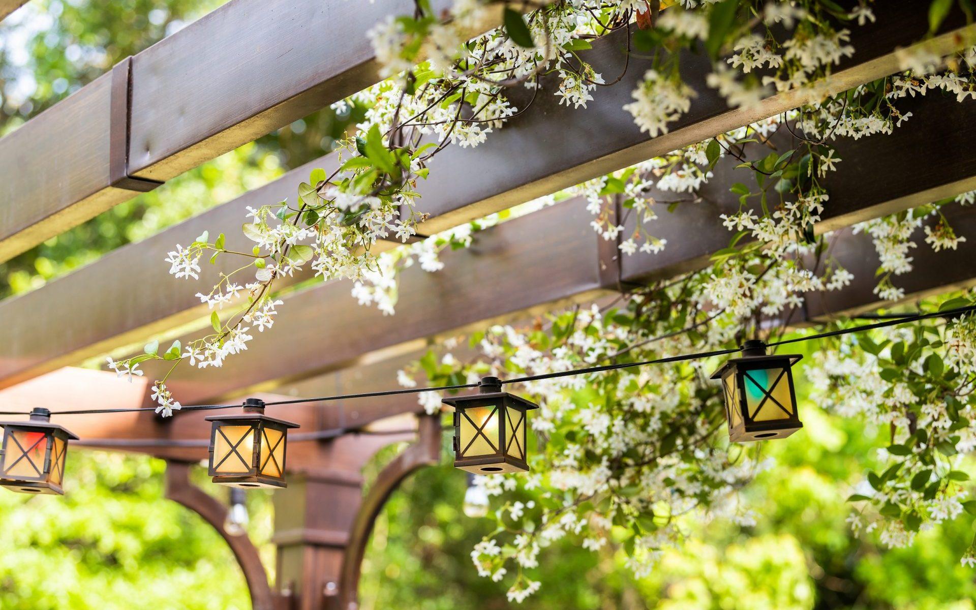 pergolas plantes grimpante à fleurs